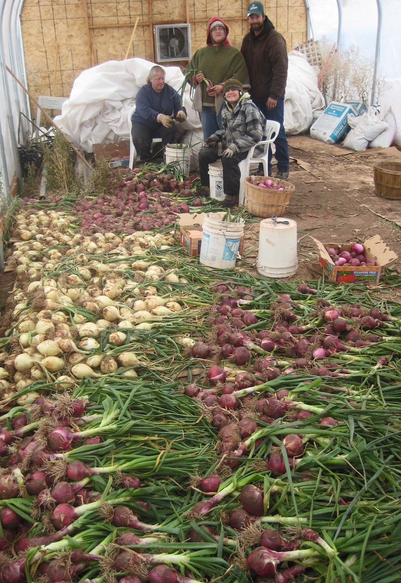 Topping onions
