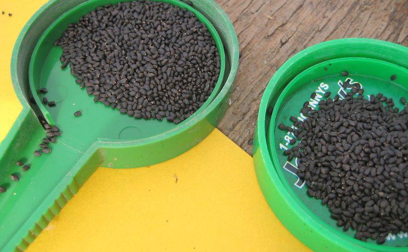 Fill seeders:basil