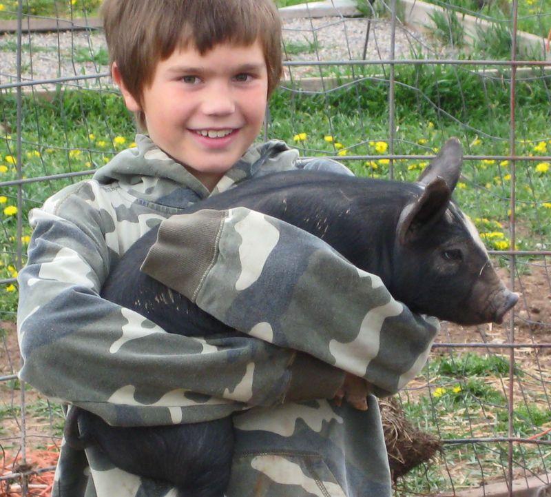 Eli:pig