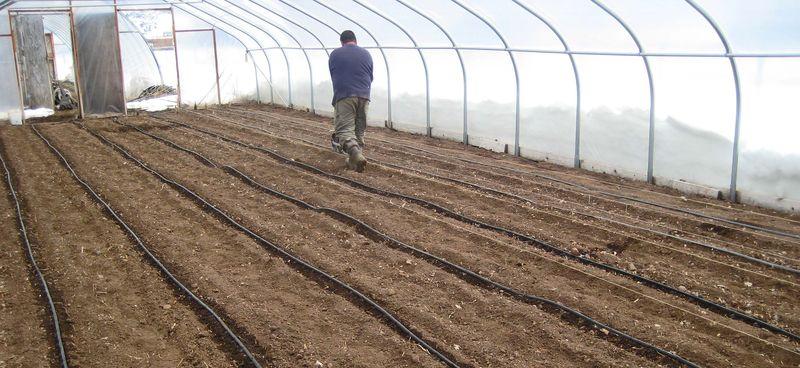 Planting gh2