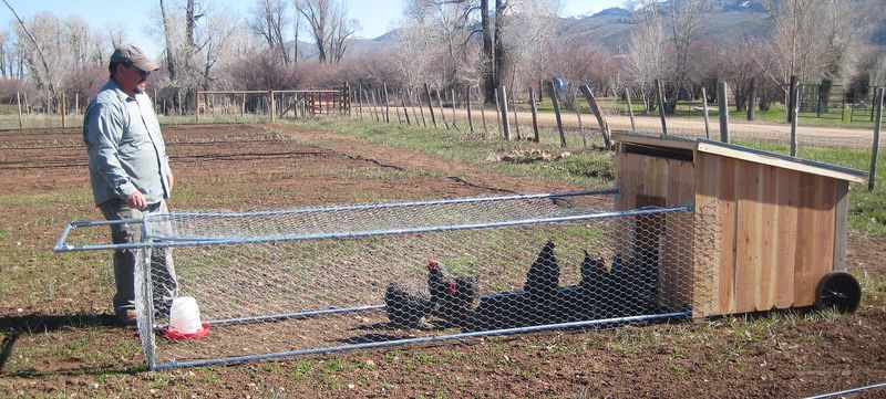 Shain chicken tractor