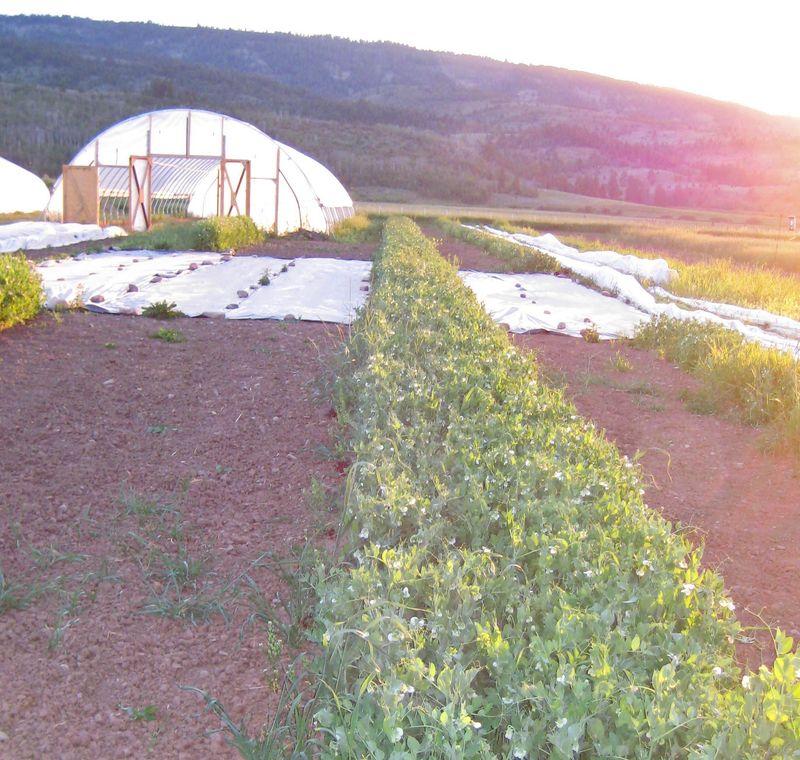 Field 3 july