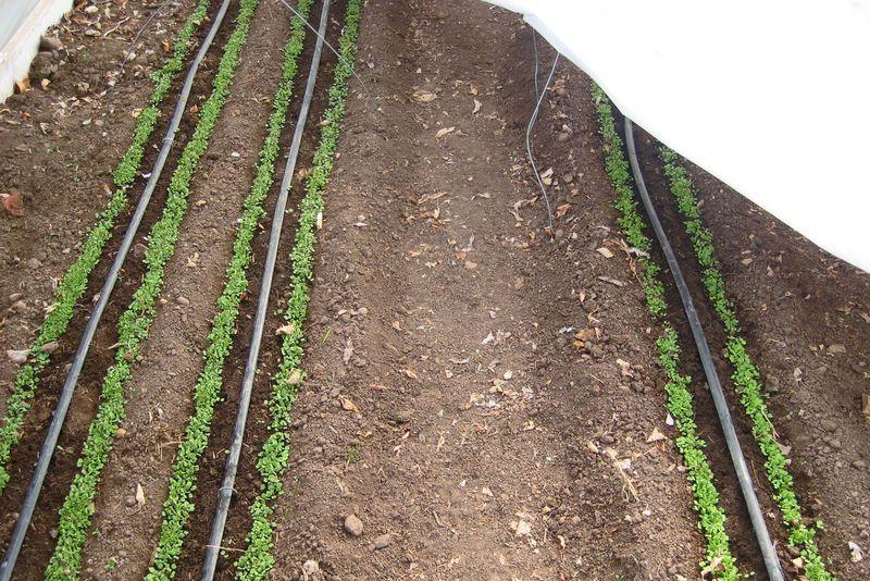 Salad planted 3:21