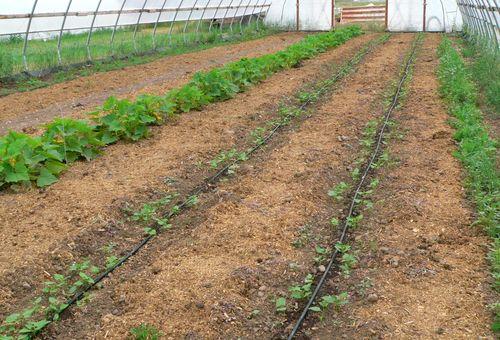 Greenhouse 7 July 23