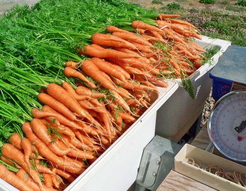 Washing carrots 7:16