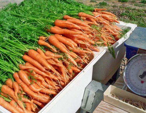 Washing carrots 7:16
