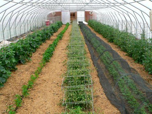 Greenhouse 6 july 23