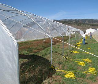 Greenhouse 3 b