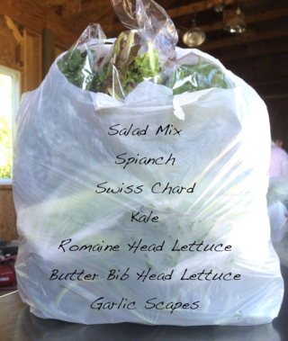 Bag of Produce July 16