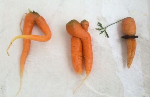 Funny carrots