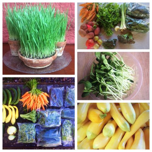 Farm collage