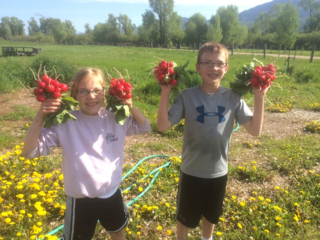 Kids with radishes