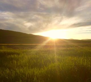 EverGreen Farm Sunset
