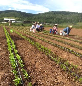 Weeding field 1