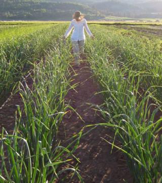 Tara, garlic field, 2009
