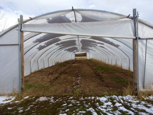 Clean up greenhouse 4