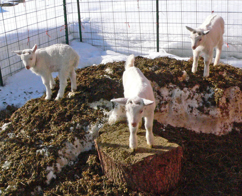 3_goats