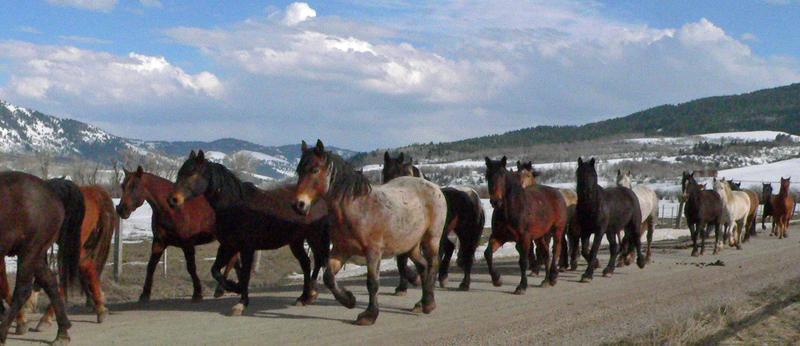 Horses_429